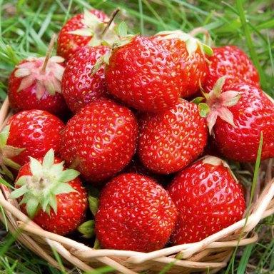 strawberries summer happiness